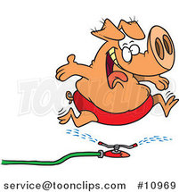 Cartoon Pig Running Through a Sprinkler by Ron Leishman
