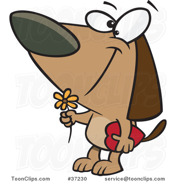 Cartoon Courting Valentines Day Dog with a Flower and Candy Box