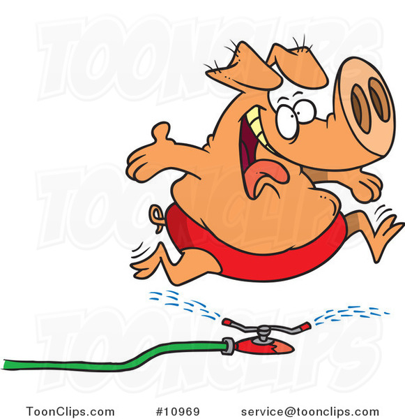 Cartoon Pig Running Through a Sprinkler