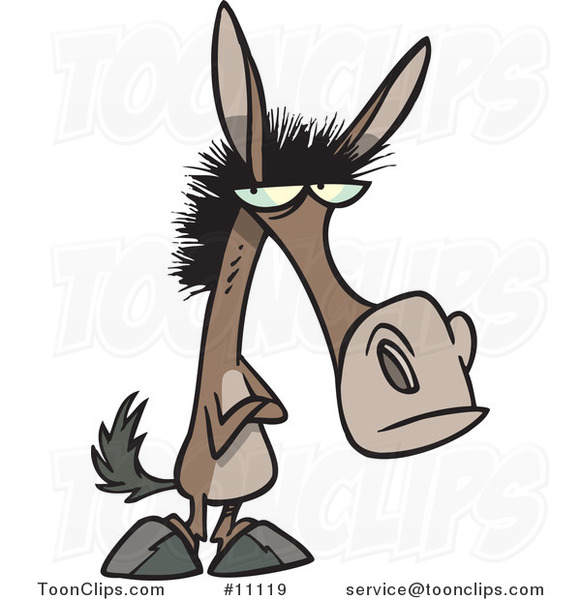 Stubborn Mule Baby