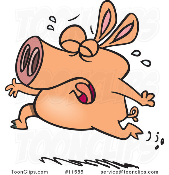 Cartoon Pig Crying and Running